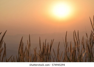 Good morning with sunlight