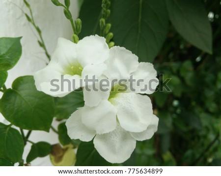 Good Morning White Flower Stock Photo Edit Now 775634899