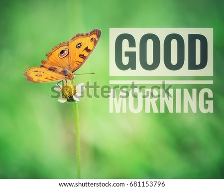Good Morning Word Written On Butterfly Stock Photo Edit Now