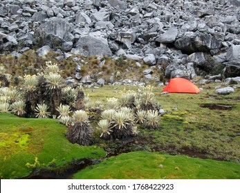 Good place for a tent near huge stones and frailejones (Espeletia) in colombian paramo, South America
