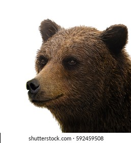 The good-natured grizzly bear on a pure white background