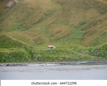 Googie Hut Brothers Point Macquarie Island