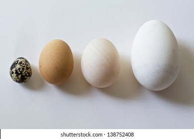 Goose, duck, hen and quail eggs, still life photography.