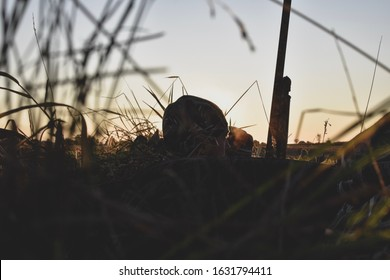 Goose duck hunting morning blinds