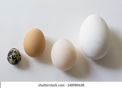 A goose egg, duck egg, hen egg and a quail egg.  Still Life photography.