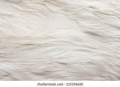goose feathers as a background