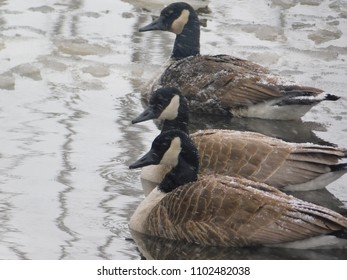 Goose Fortress against the Snow