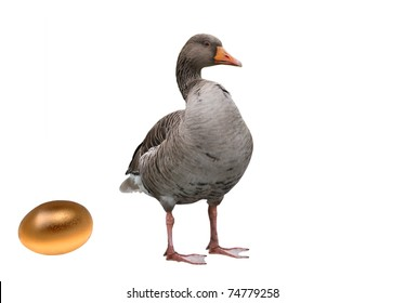 Goose with a golden egg