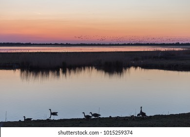 Goose and gooslings silhouetted against sunset