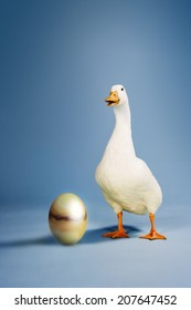 Goose standing by golden egg against blue background