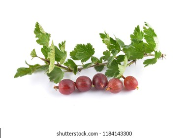 Gooseberry with twig on white
