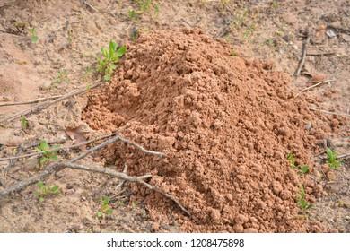 gopher hill dirt