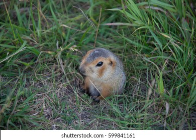gopher near hole