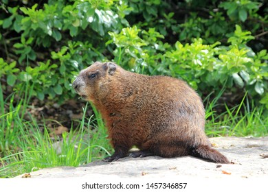 Gopher sitting on the stone