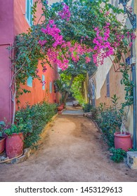 Goree, Senegal. Red, sandy path between the houses with plenty of colorful flowers on the Goree island. Gorée. Dakar, Senegal. Africa.