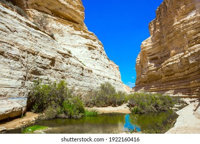 The gorge Ein Avdat is formed by the Qing River in the Negev desert. Shallow puddle in the canyon overgrown with grass. Israel. The concept of active and photo tourism