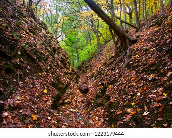 Gorge fills with falling leaves at Kishwaukee Gorge Forest Preserve in Illinois