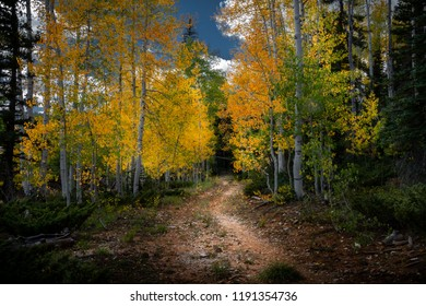 Gorgeous colored leaves on a path in a beautiful forest during the autumn season.
