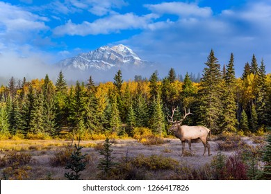 Gorgeous deer with horns grazing on the lake. Autumn  morning. Rocky Mountains, Lake Patricia. Canada. Concept of ecological, active and photo-tourism