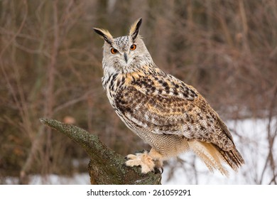 Gorgeous eagle-owl sits on a tree trunk in autumn forest, Russia