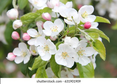 gorgeous flowers images stock photos vectors shutterstock