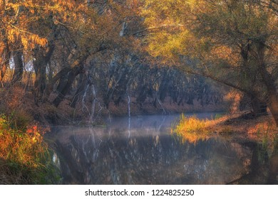 Gorgeous golden trees on the banks of beautiful small river