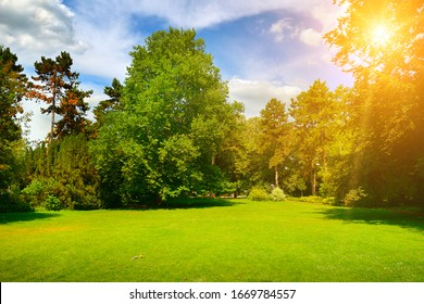 Gorgeous green meadow in summer park and blue sky.