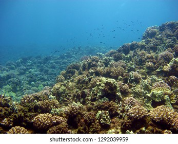 A gorgeous and healthy coral reef in Molokai