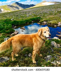 Gorgeous healthy dog hiking