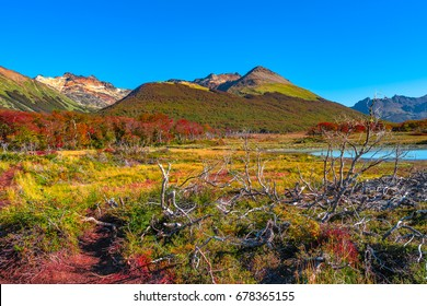 Gorgeous landscape of Patagonia's Tierra del Fuego National Park in Autumn, Argentina