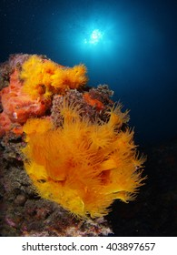 Gorgeous mediterranean underwater scene with orange coral and the sun in the surface