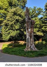 Gorgeous old cut tree at Roath Park, Wales, UK