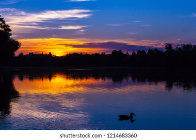 A gorgeous orange blue sunset on the lake, the silhouette of a forest and trees on the horizon and a duck sailing past, leaving ripples on the water.