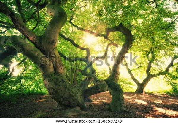 Gorgeous overgrown trees in the sun forest