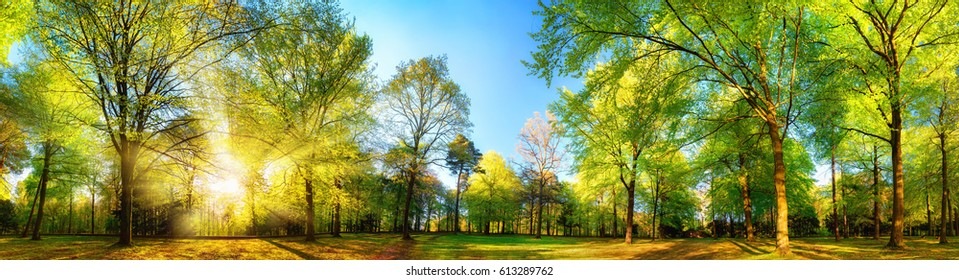 Gorgeous panoramic spring scenery with the sun beautifully illuminating the fresh green foliage