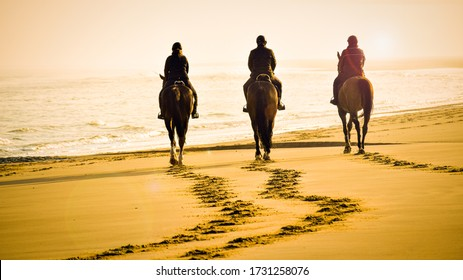 gorgeous picture of three riders with beautiful brown horses riding into the sunset on the beach towards the calm sea. Artistic view over the footsteps on the beach in orange light with lens flare