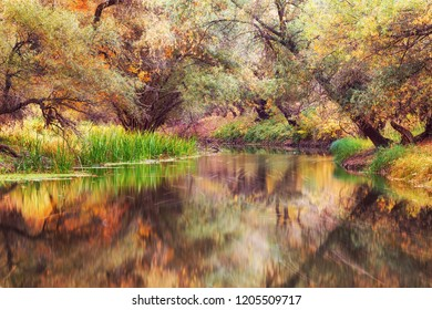 Gorgeous river with trees dressed in full autumn