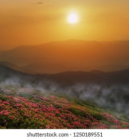 gorgeous spring floral scenery, red flowers on hills of mountains, stunning blooming flowers in morning foggy sunlight, awesome nature flowers background, Europe