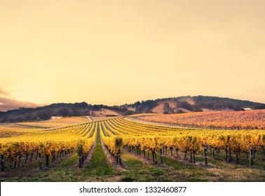 Gorgeous Sunset over an Australian vineyard