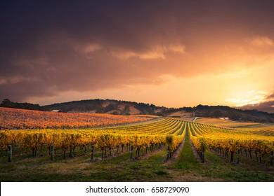 Gorgeous Sunset over a South Australian vineyard