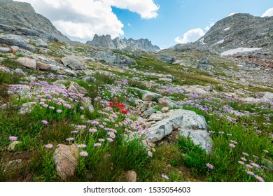 Gorgeous views of wildflowers and mountains in the Wind River Range of Wyoming