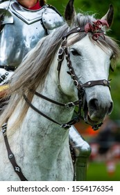 A gorgeous white horse carries a female knight in shining armor into battle.