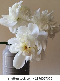 Gorgeous white Peony blossoms in vase, close up
