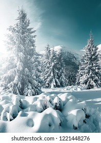 Gorgeous white spruces on a frosty day. Location place Carpathian national park, Ukraine, Europe. Alps ski resort. Picturesque wintry scene. Blue toning. Happy New Year! Discover the beauty of earth.