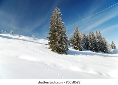 gorgeous winter season with fir trees