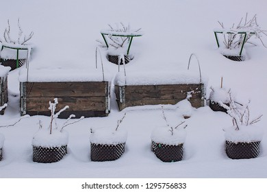 Gorgeous  winter view of exterior of a private garden in plastic pots. Strawberry growing in pallet collar covered, with snow. Winter day. Gorgeous nature background.
