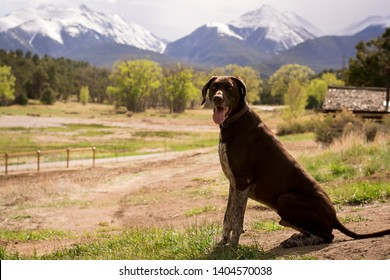 Gorgeous young German Shorthaired Pointer dog running in field and sitting in a meadow with a blurred background while hunting birds. Purebred with a happy and excited friendly personality.