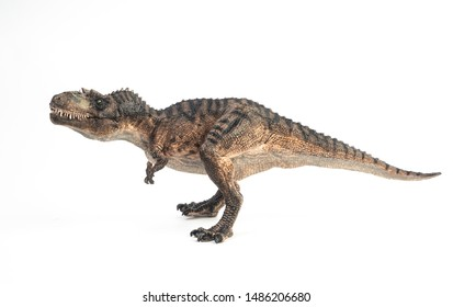 Gorgosaurus Dinosaur on white background  .