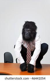 Gorilla businessman in shirt and tie sat on an office desk