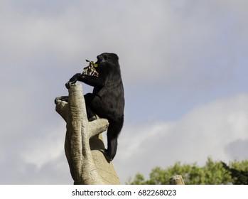 Gorilla on Tree